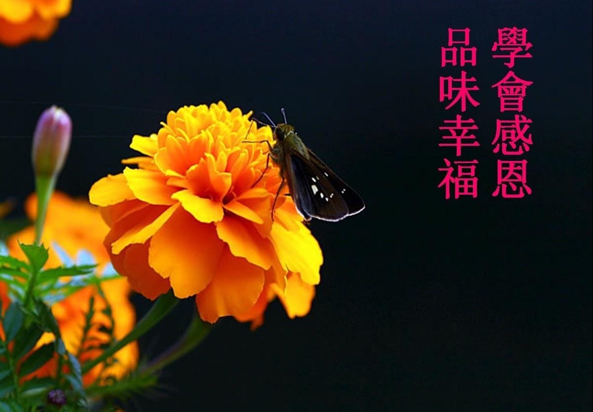 【荷塘】有了感恩,才会幸福(散文)